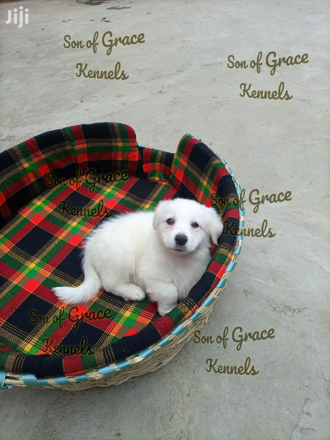 Archive: Pet Beds Available