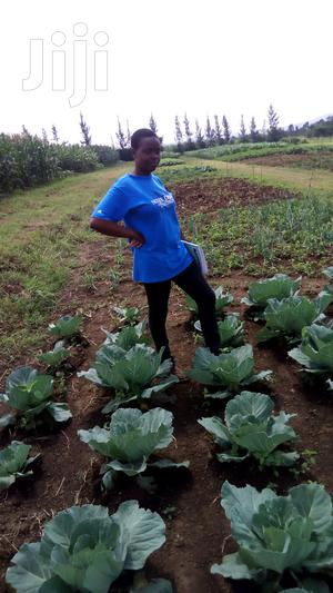 Shamba Worker Required   Farming & Veterinary CVs for sale in Bungoma, Cheptais
