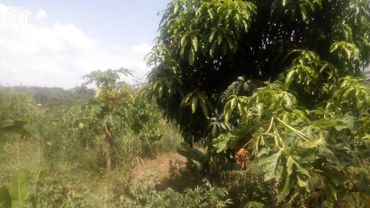 Archive: 4acre Land Suitable for Home Settlement and Agriculture