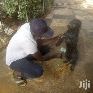 Veterinary And Dog Grooming Services