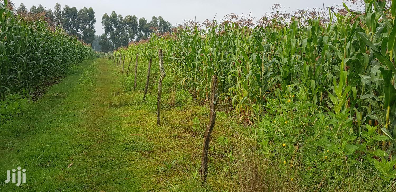 Prime 5 Acres Land for Sale Tugen Estate Moiben Eldoret | Land & Plots For Sale for sale in Eldoret CBD, Uasin Gishu, Kenya