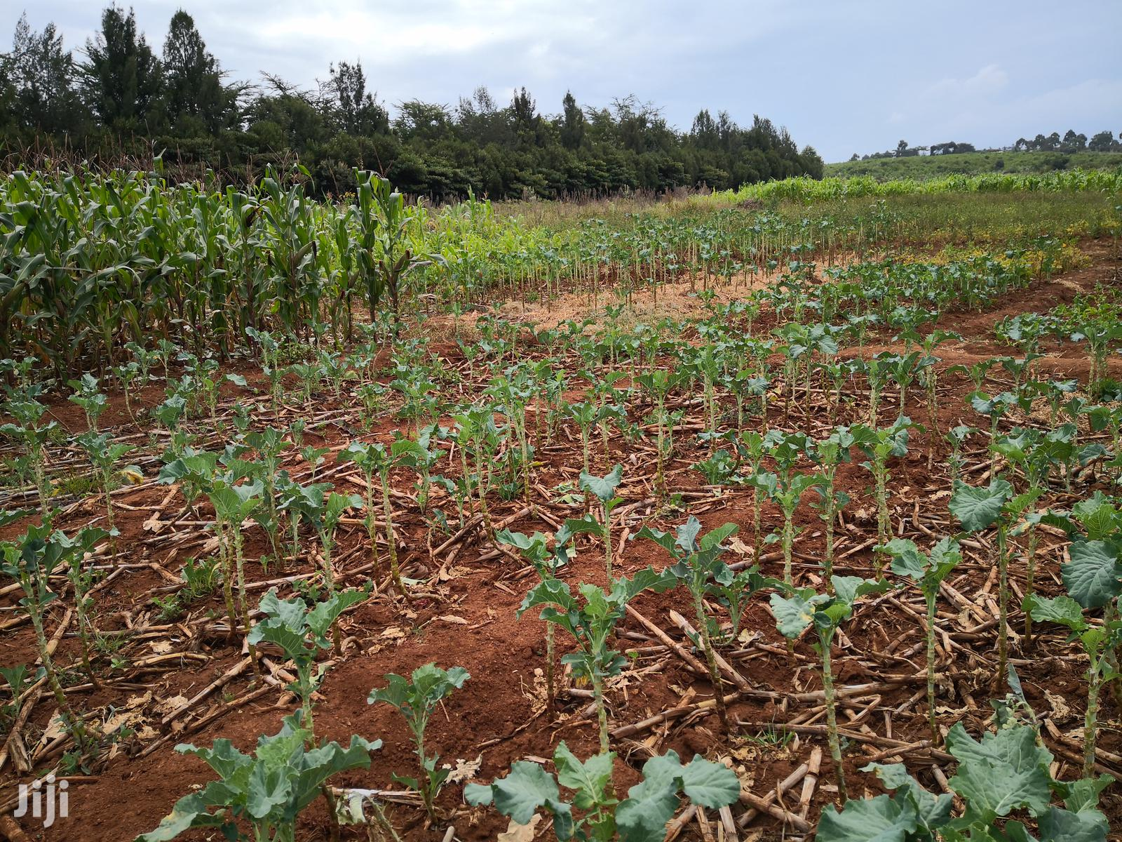 50x100 Prime Plot for Sale in Gilgil Nakuru County. | Land & Plots For Sale for sale in Gilgil, Nakuru, Kenya