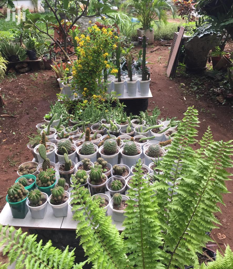 Flowers On Sell   Garden for sale in Kisauni, Mombasa, Kenya