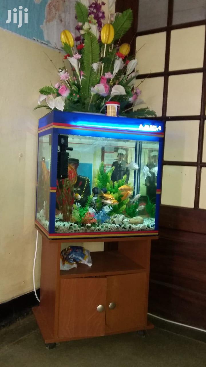 Free-standin In-house Customized FISH AQUARIUM Made In Kenya