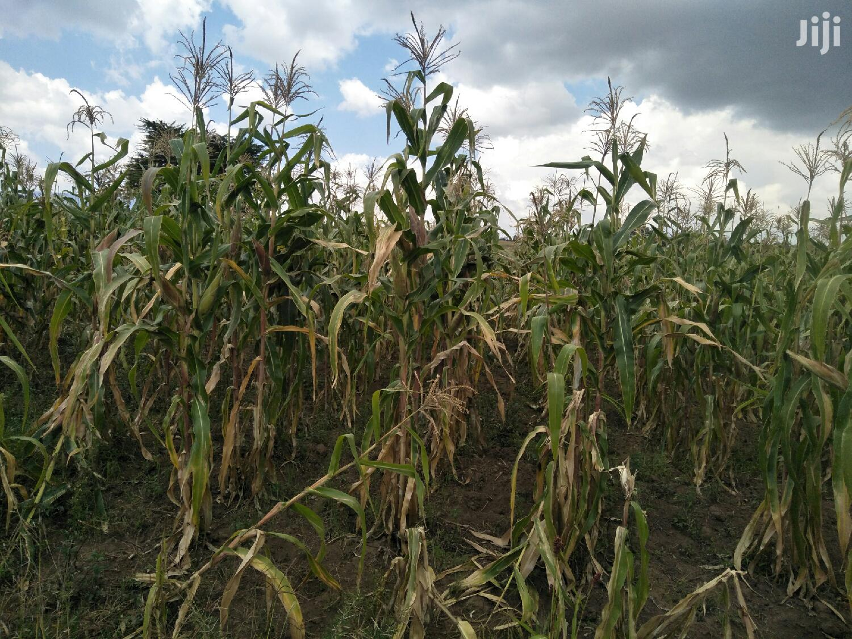One Acre of Farming Land in Nakuru