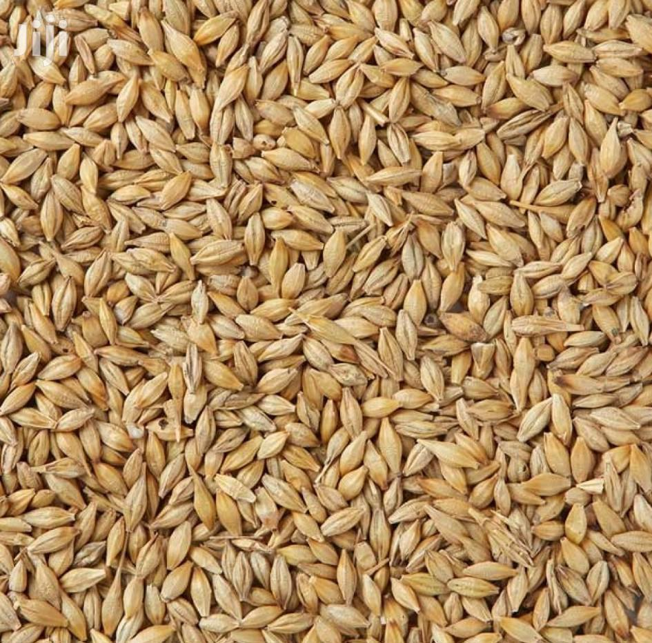Barley Seeds Per Kg