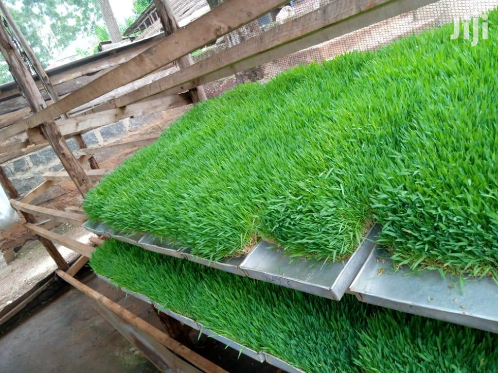 Barley Seeds Per Kg   Feeds, Supplements & Seeds for sale in Nairobi Central, Nairobi, Kenya