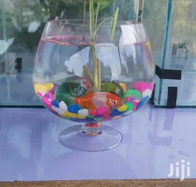Magic Fish Bowls | Fish for sale in BuruBuru, Nairobi, Kenya