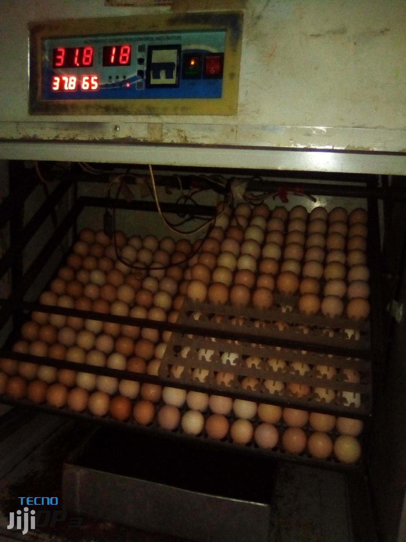 Egg Incubator | Farm Machinery & Equipment for sale in Thika, Kiambu, Kenya