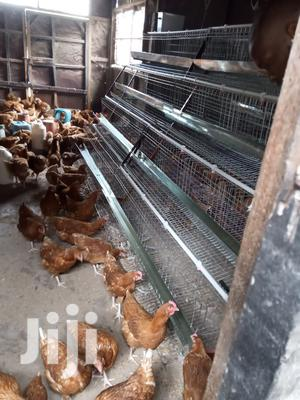 Chicken Cages   Farm Machinery & Equipment for sale in Nairobi, Embakasi