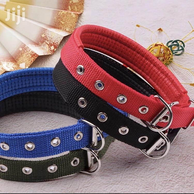Archive: Dog Collars For Big Adult Breeds
