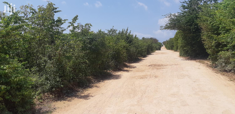 Archive: 👉Kilifi Tezo Land on Sale 👉It's on Beach Side