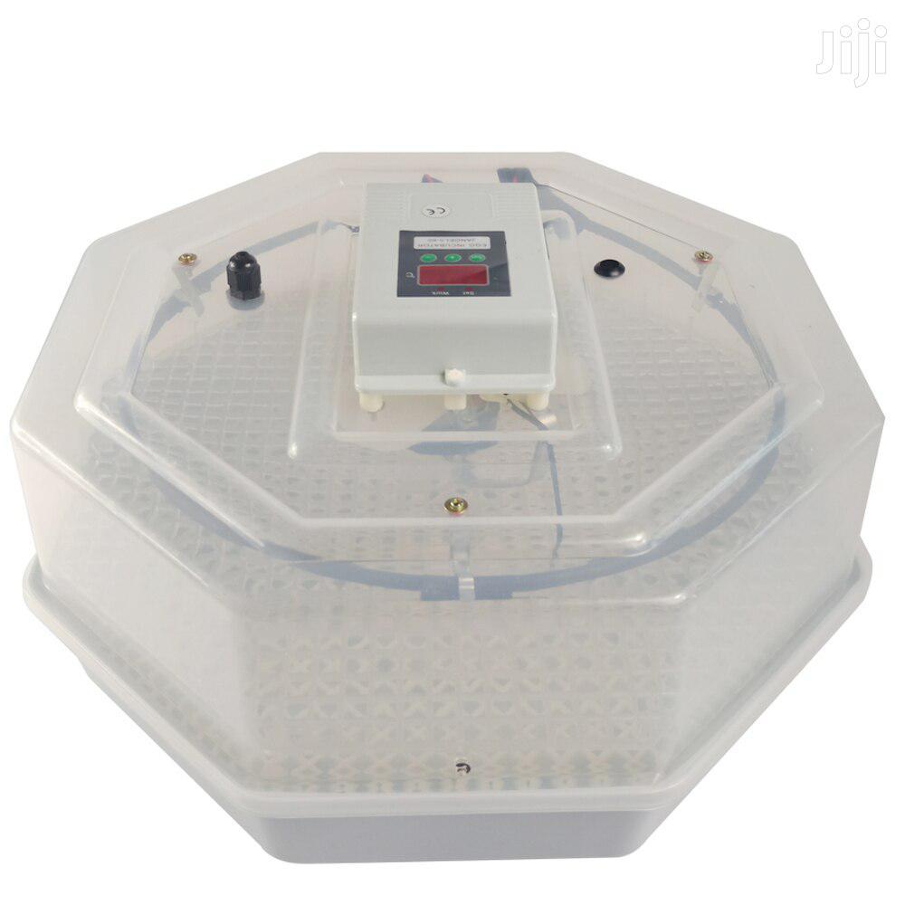 Capacity 60 Eggs Incubator