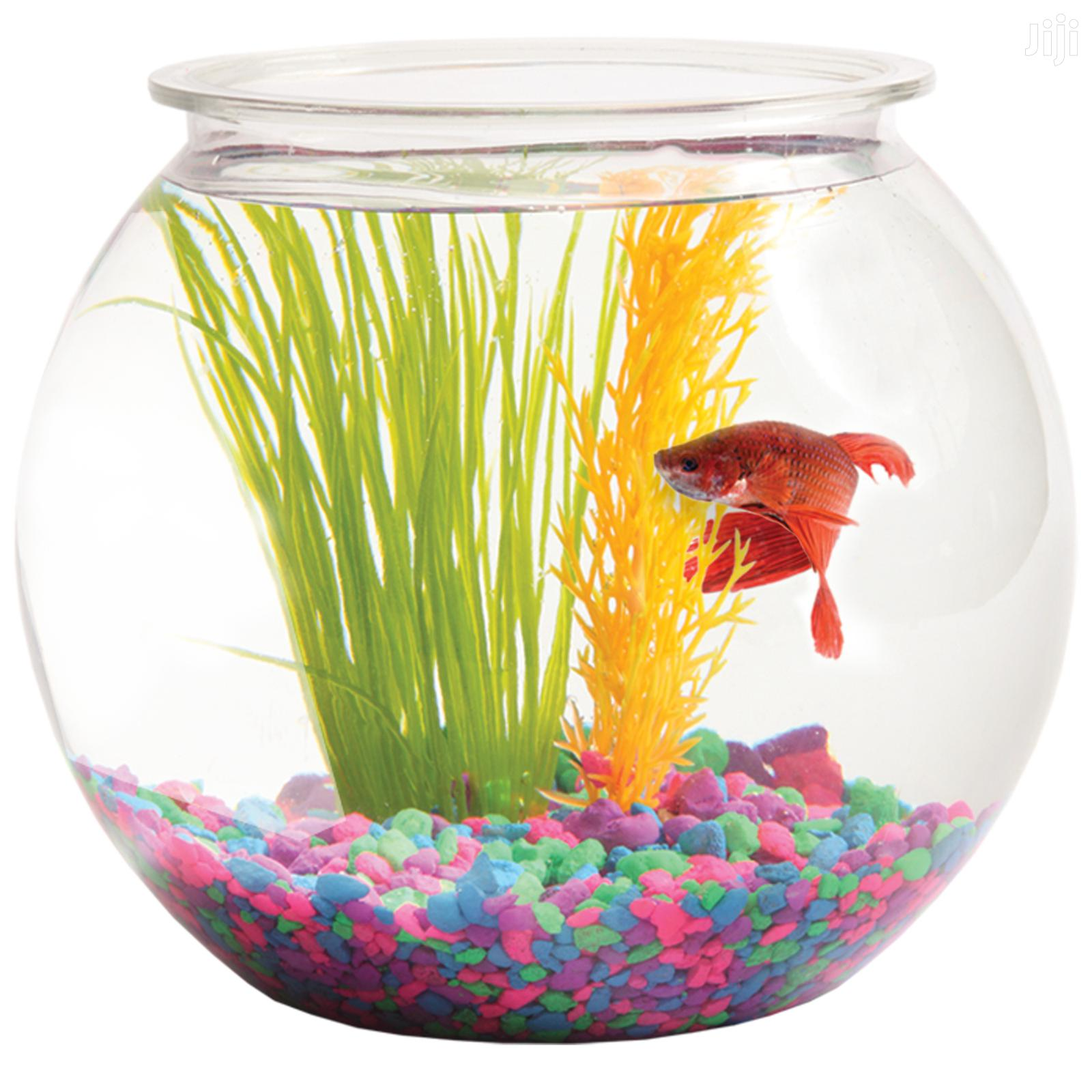Fish Bowl -Medium