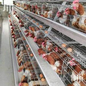 Chicken Cages   Farm Machinery & Equipment for sale in Nairobi, Utalii