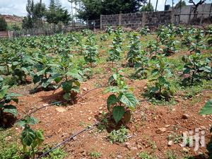 Tree Tomato Drip Irrigation Kit | Farm Machinery & Equipment for sale in Kapseret, Langas