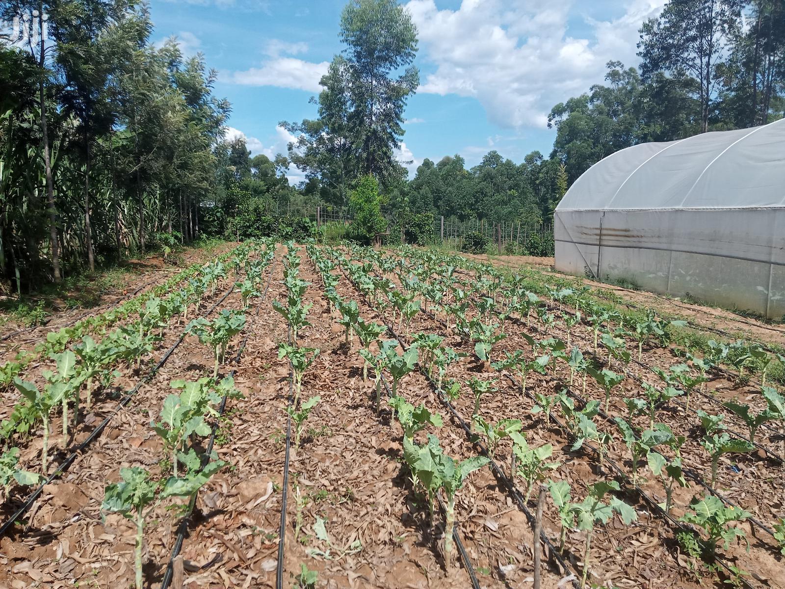 Sukuma Wiki Drip Irrigation Kit For Sale In Kenya   Farm Machinery & Equipment for sale in Langas, Uasin Gishu, Kenya