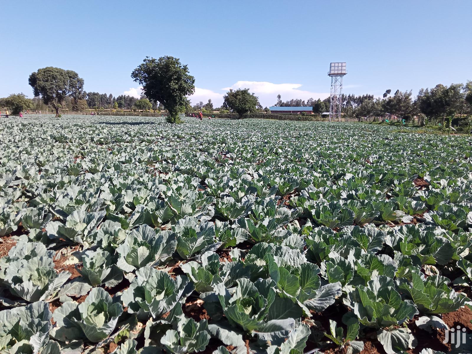 Cabbage Drip Irrigation Kit In Kenya For Sale | Farm Machinery & Equipment for sale in Langas, Uasin Gishu, Kenya