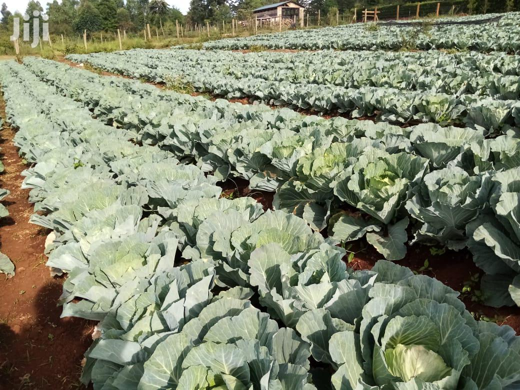 Cabbage Drip Irrigation Kit In Kenya For Sale