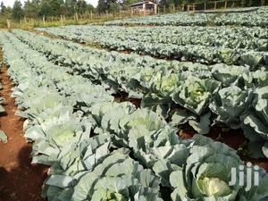 Cabbage Drip Irrigation Kit In Kenya For Sale | Farm Machinery & Equipment for sale in Kapseret, Langas