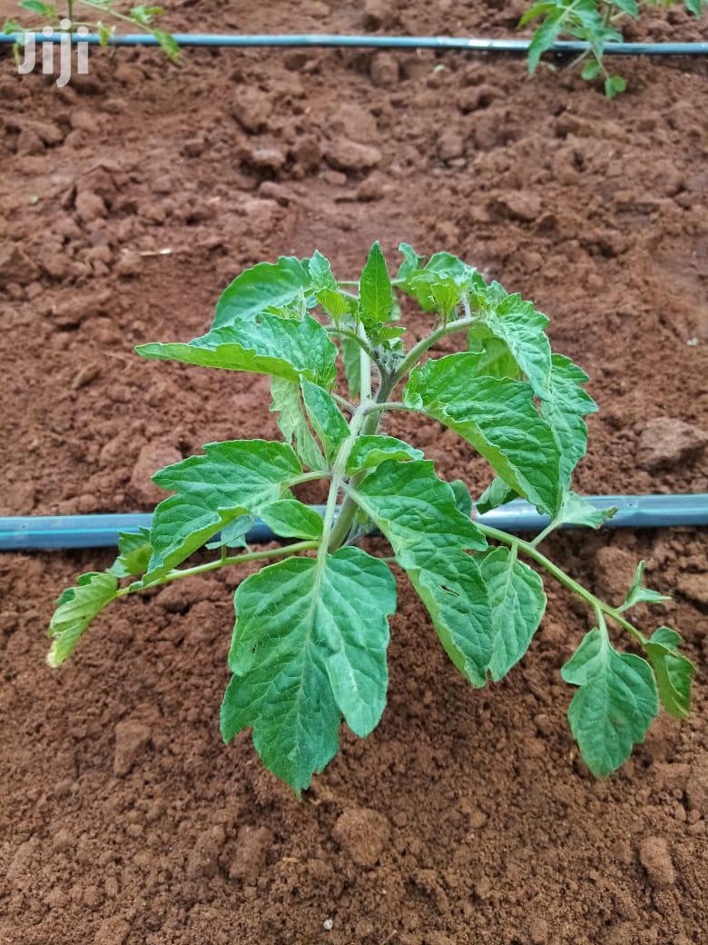 Tomato Drip Irrigation System In Kenya For Sale | Farm Machinery & Equipment for sale in Langas, Uasin Gishu, Kenya