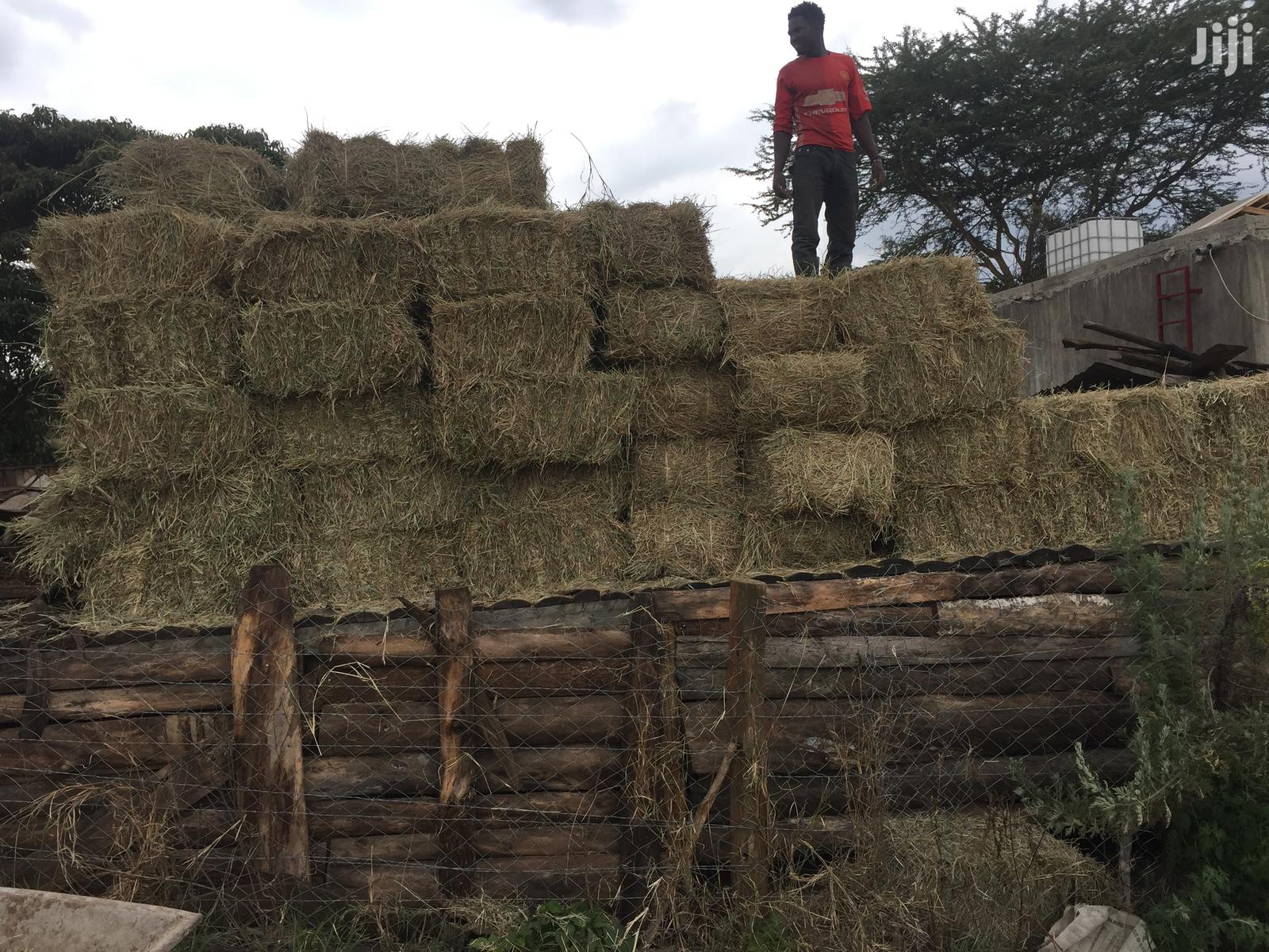 Archive: Hay Grass in Bale