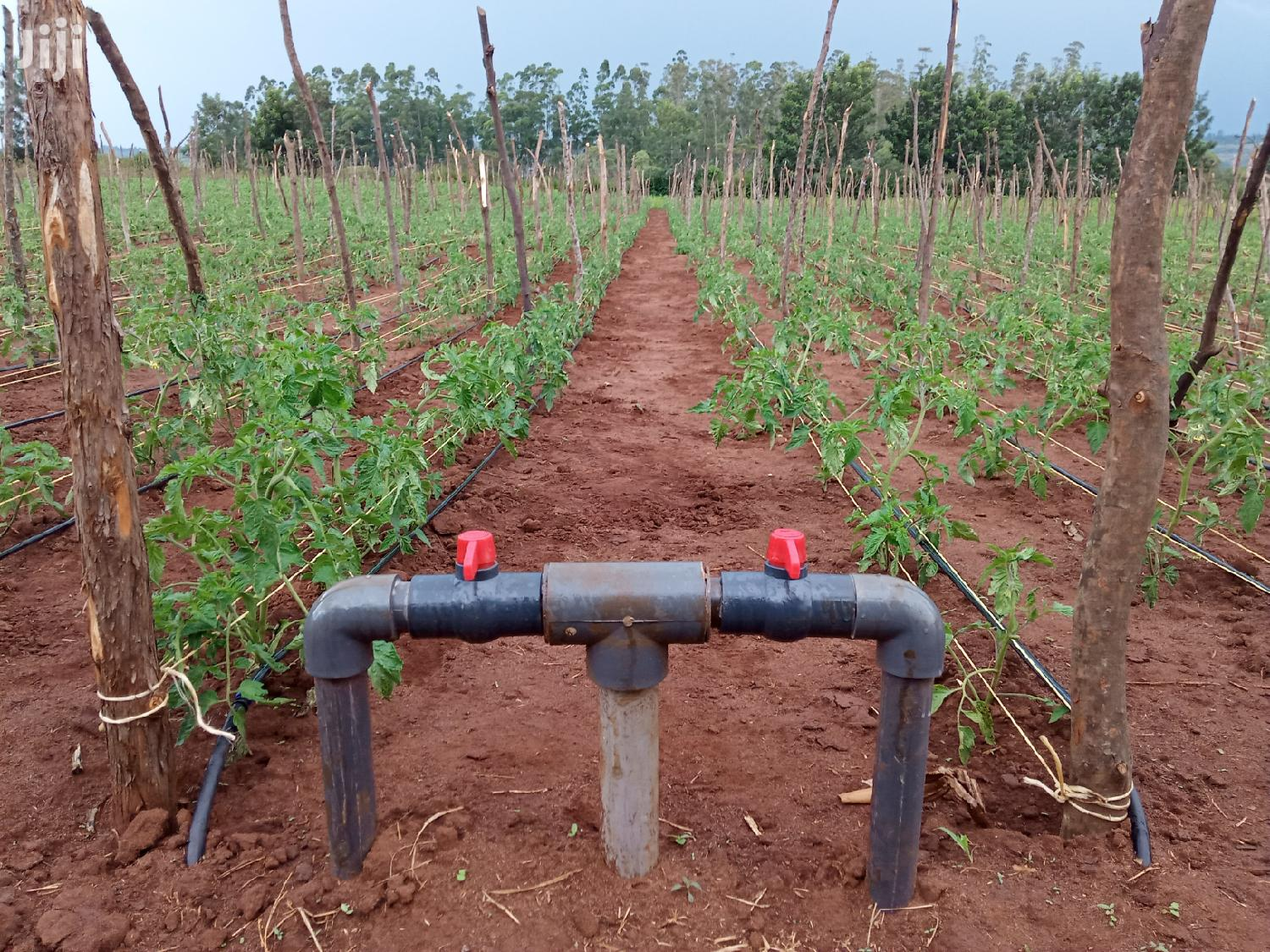Tomato Drip Irrigation System In Kenya For Sale