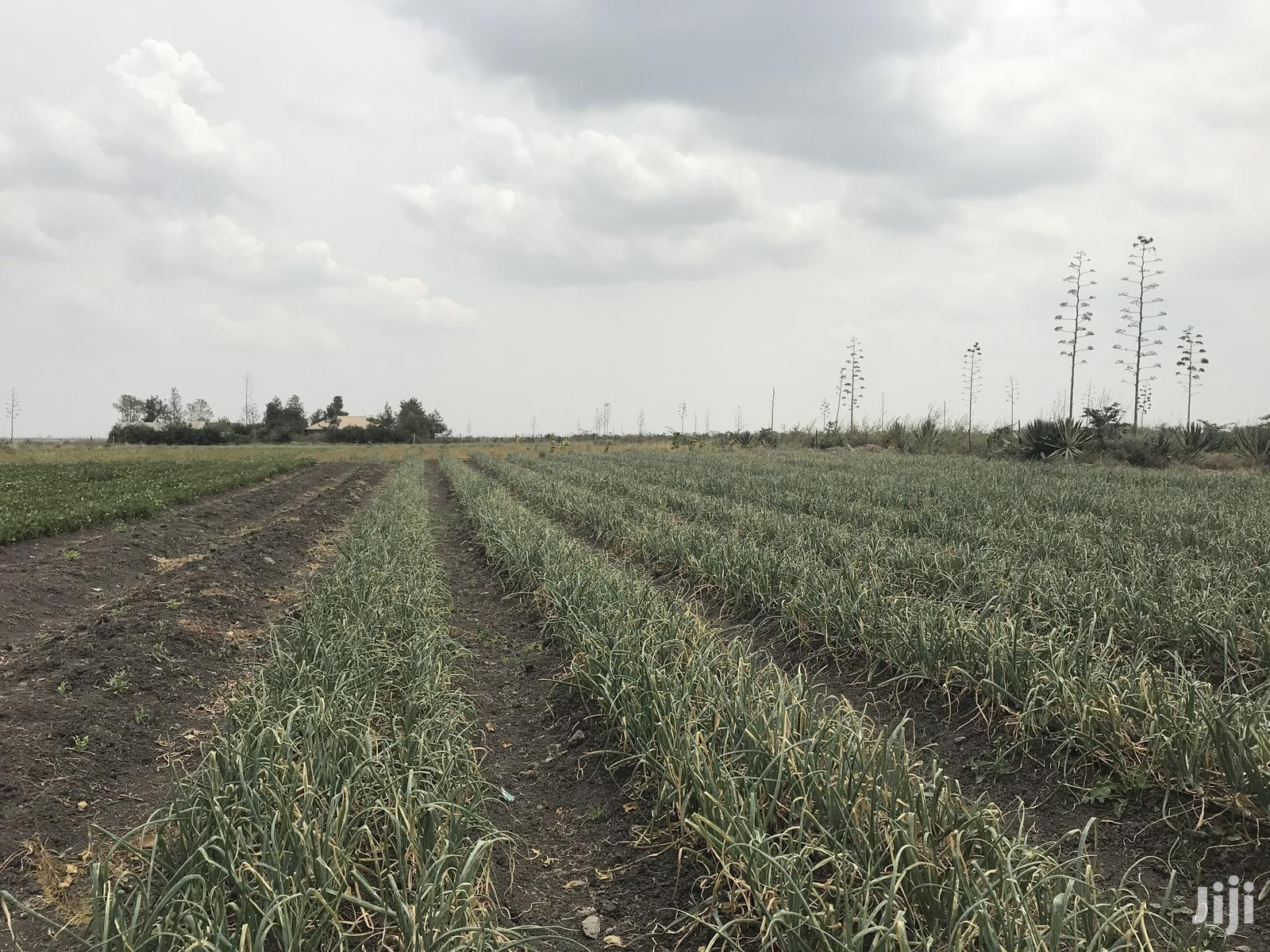 1acre Katani To Let   Land & Plots for Rent for sale in Syokimau/Mulolongo, Machakos, Kenya