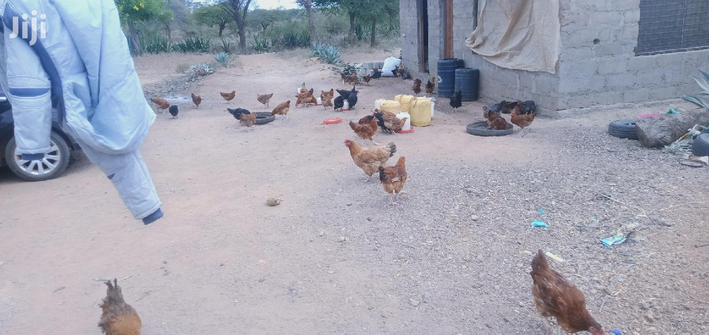 Archive: Improved Kienyeji Chicken On Sale