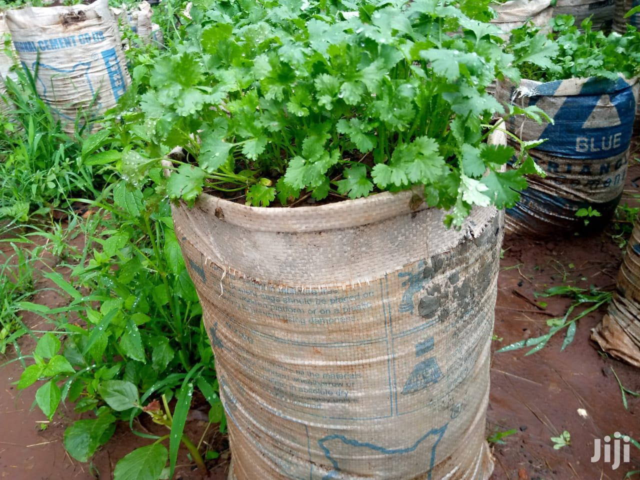 Stabil Farms Dhania Projects | Feeds, Supplements & Seeds for sale in Nairobi Central, Nairobi, Kenya