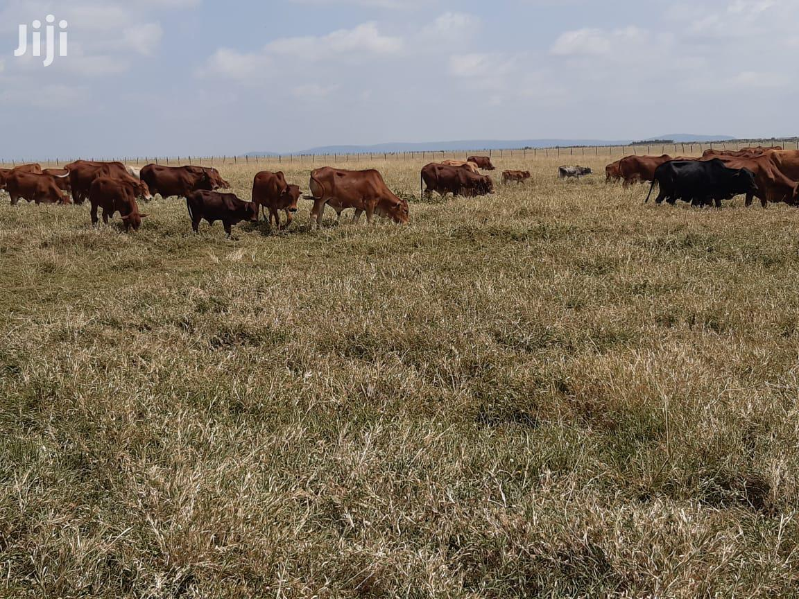 Archive: Selling Prime Land 50 Acres In Lolung'a Narok County