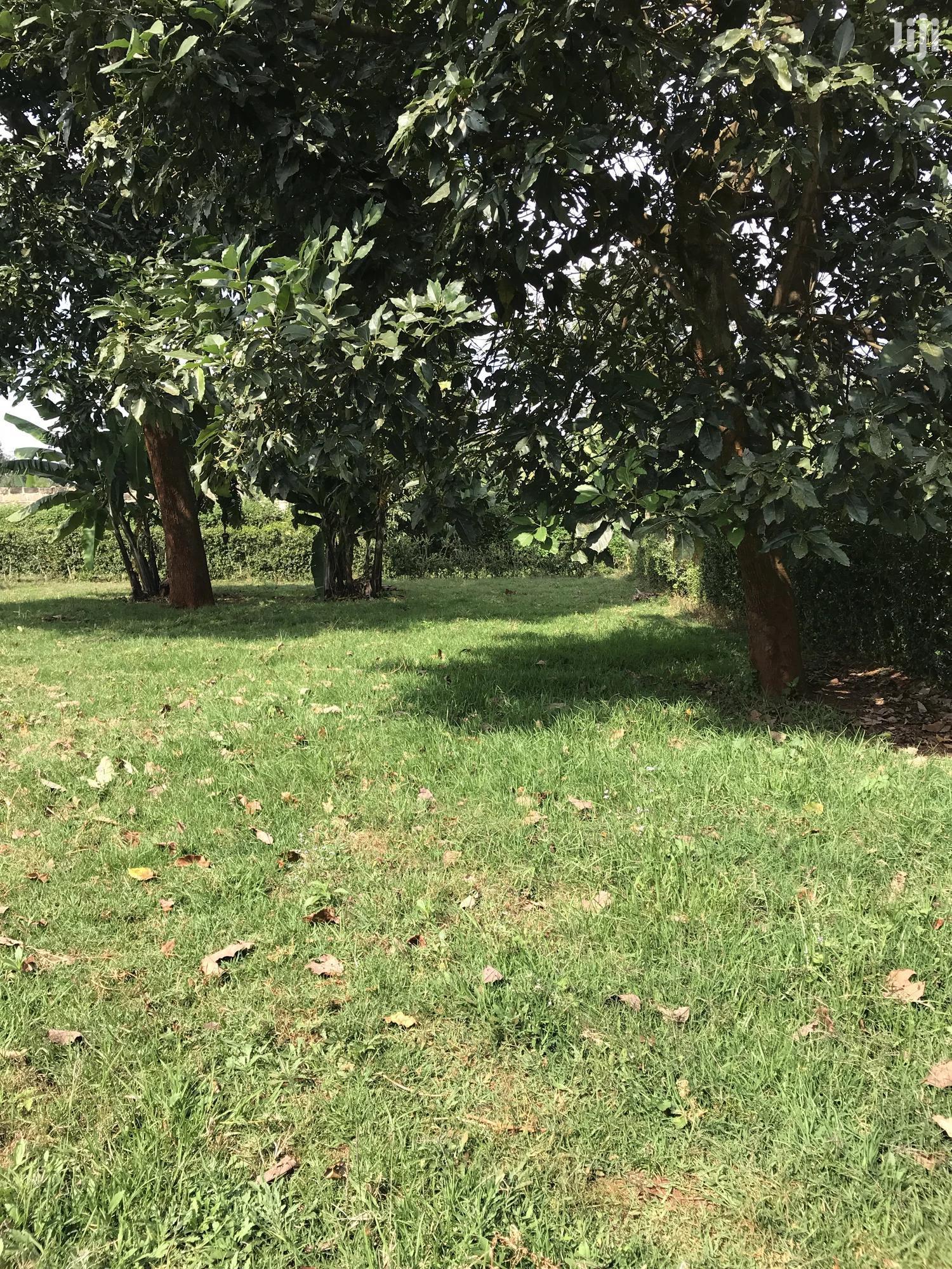 Yard For Let   Land & Plots for Rent for sale in Gatitu/Muruguru, Nyeri, Kenya