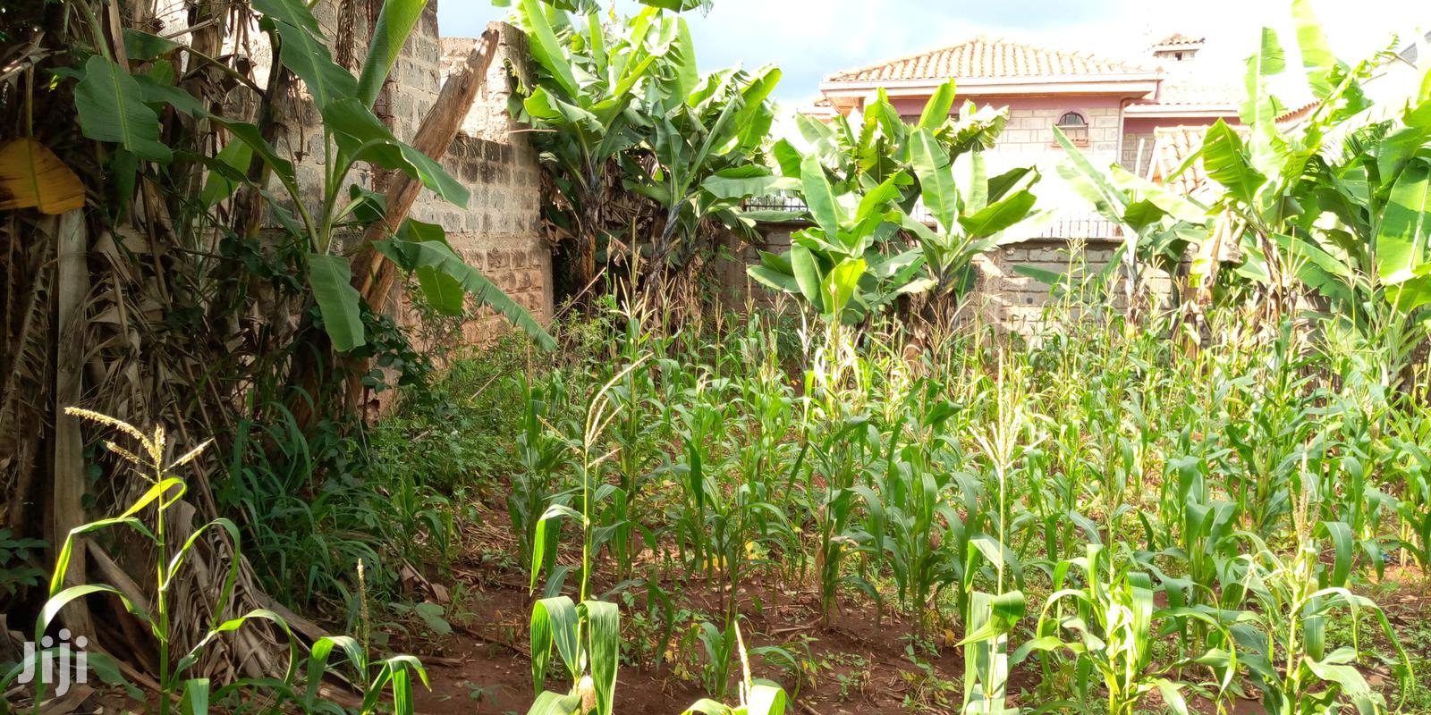 Archive: Land for Sale at Thome