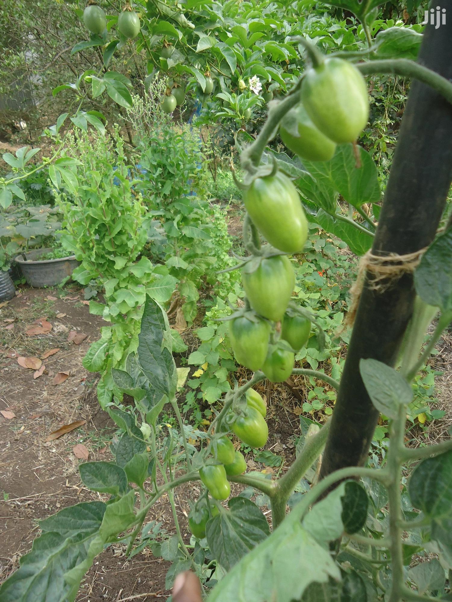 Heirloom Red Bella Rosa Cherry Tomato Seedlings | Feeds, Supplements & Seeds for sale in Ngong, Kajiado, Kenya