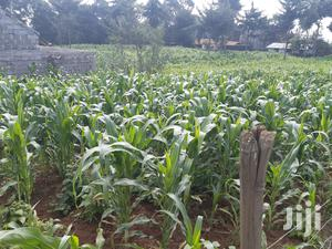 1and 1/4 Acres of Land for Sale   Land & Plots For Sale for sale in Nyandarua, North Kinangop