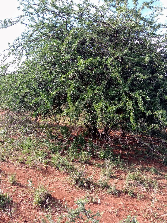 50 Acres Farming Land in Eremit(Near Tinga )At 200k Per Acre | Land & Plots For Sale for sale in Ngong, Kajiado, Kenya