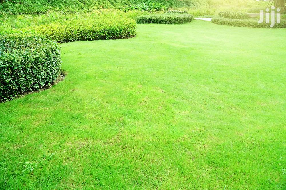 Lawncare & Grass Cutting Services Mombasa.Very Affordable