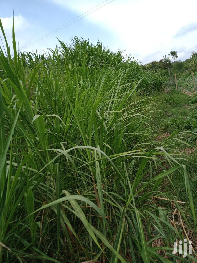 2 and Half Acres in Narumoru Town. | Land & Plots For Sale for sale in Naromoru Kiamathaga, Nyeri, Kenya