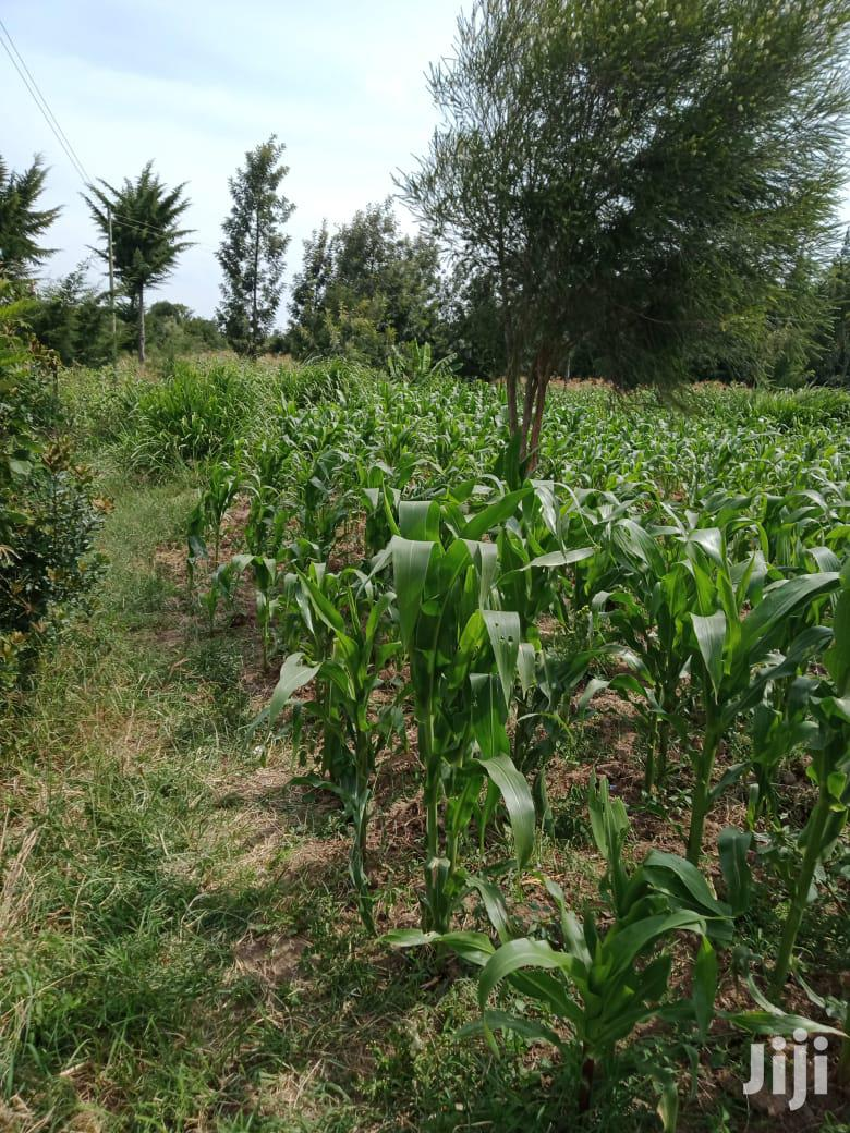 2 and Half Acres in Narumoru Town.