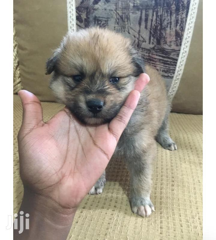 Archive: Young Female Mixed Breed Dog