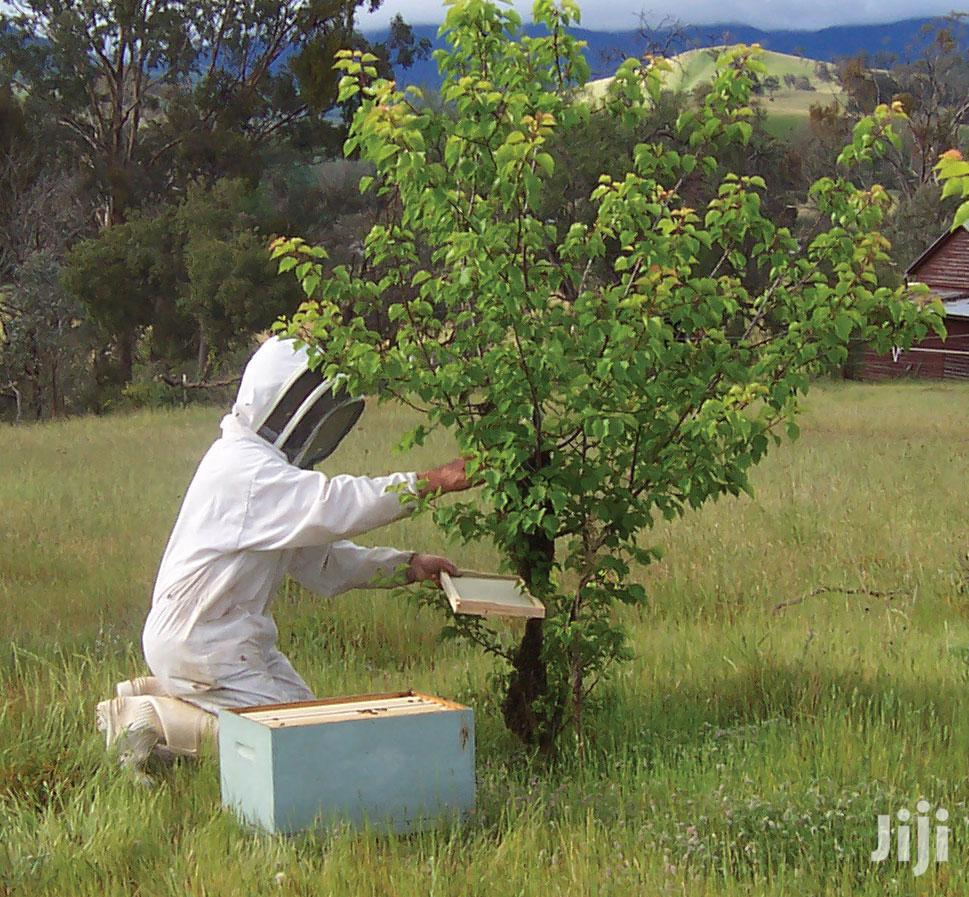 Wanted ! Experienced Beekeeper