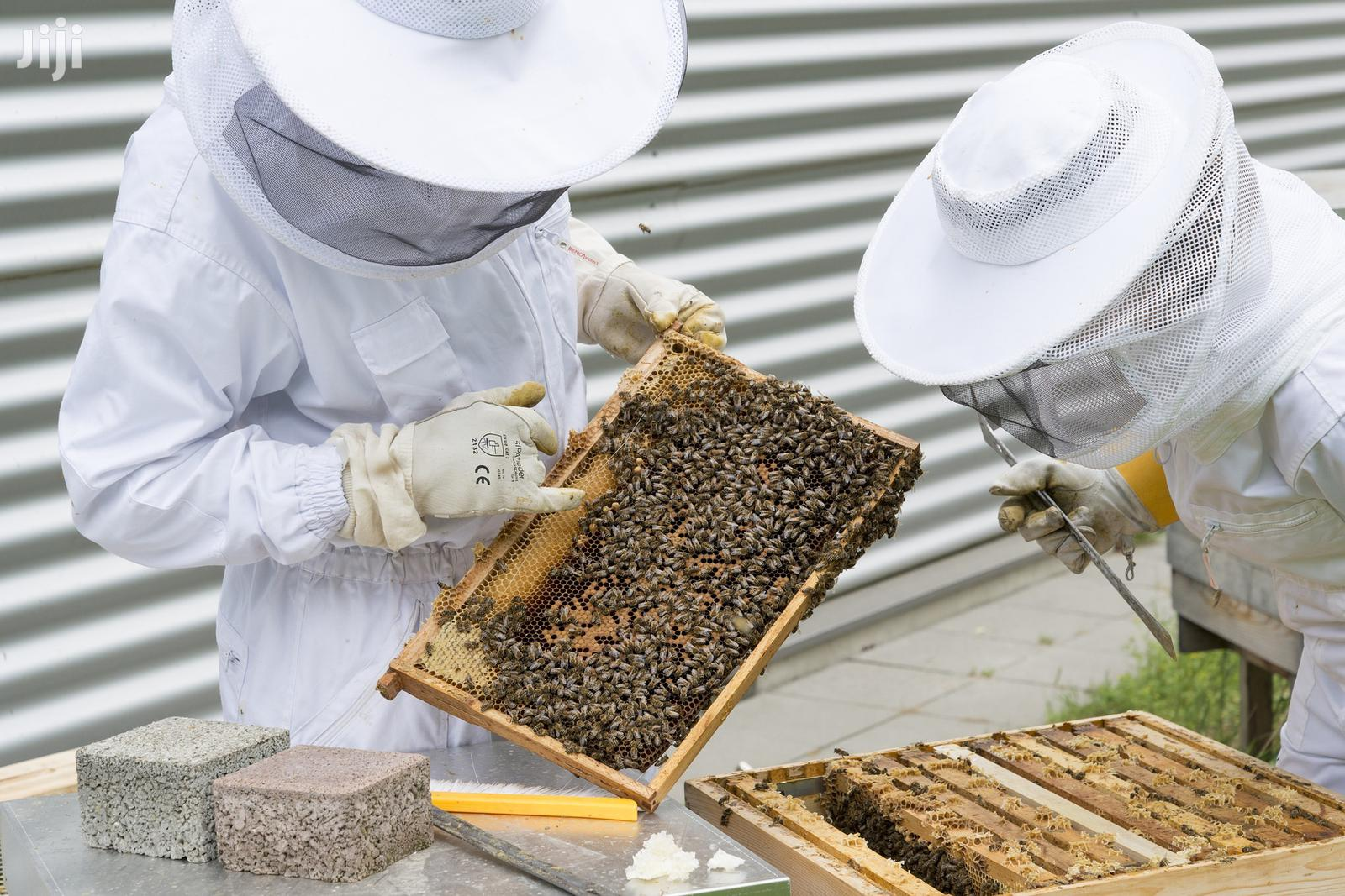 Wanted ! Experienced Beekeeper | Part-time & Weekend Jobs for sale in Nairobi Central, Nairobi, Kenya