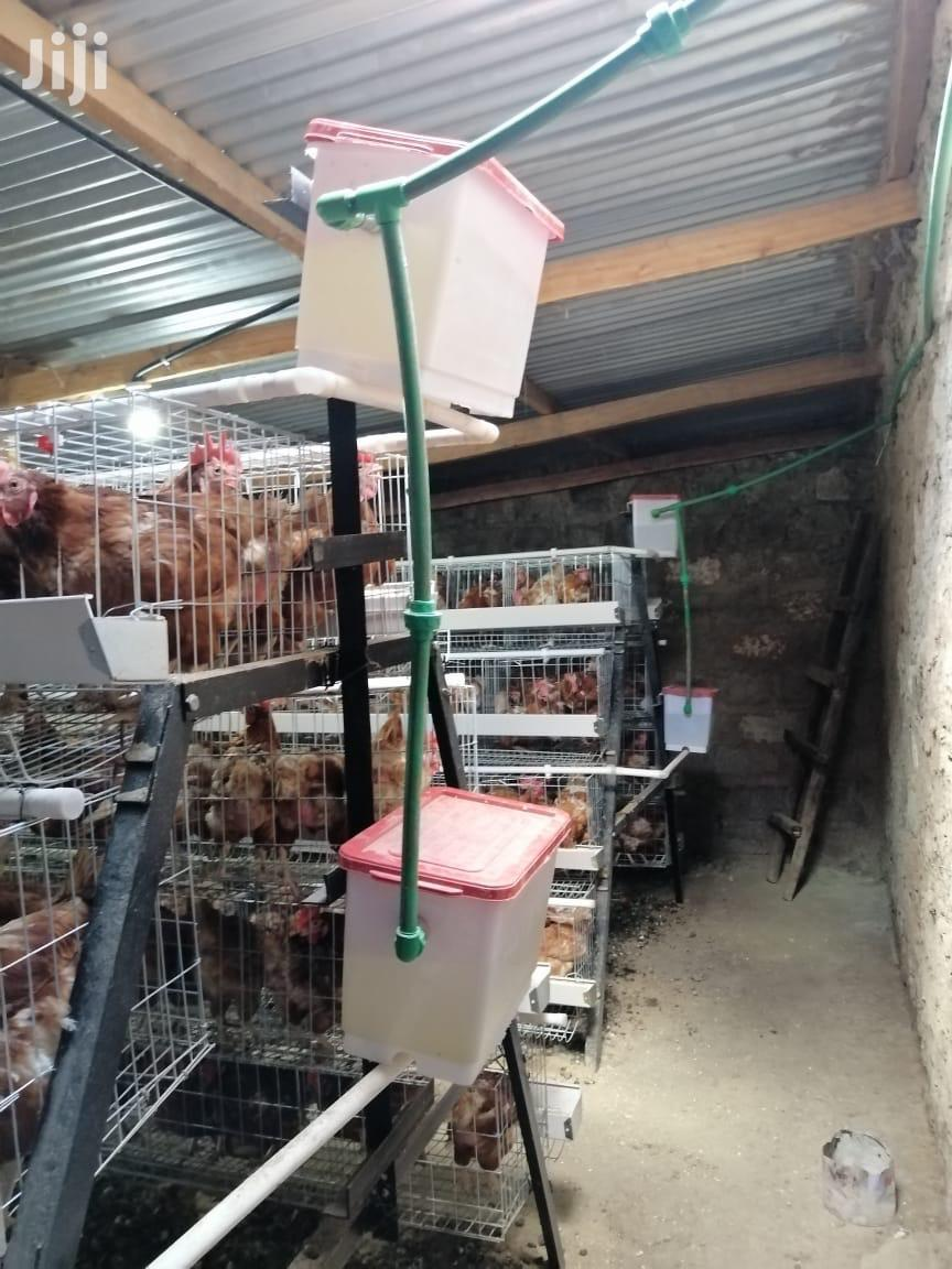 Commercial Chicken Cages