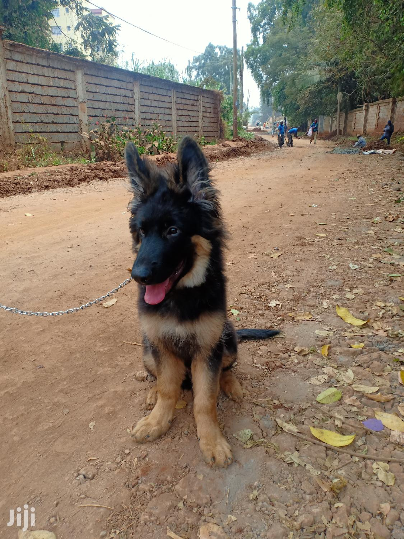 Dog Trainer,Consultancy   Pet Services for sale in Kabete, Kiambu, Kenya