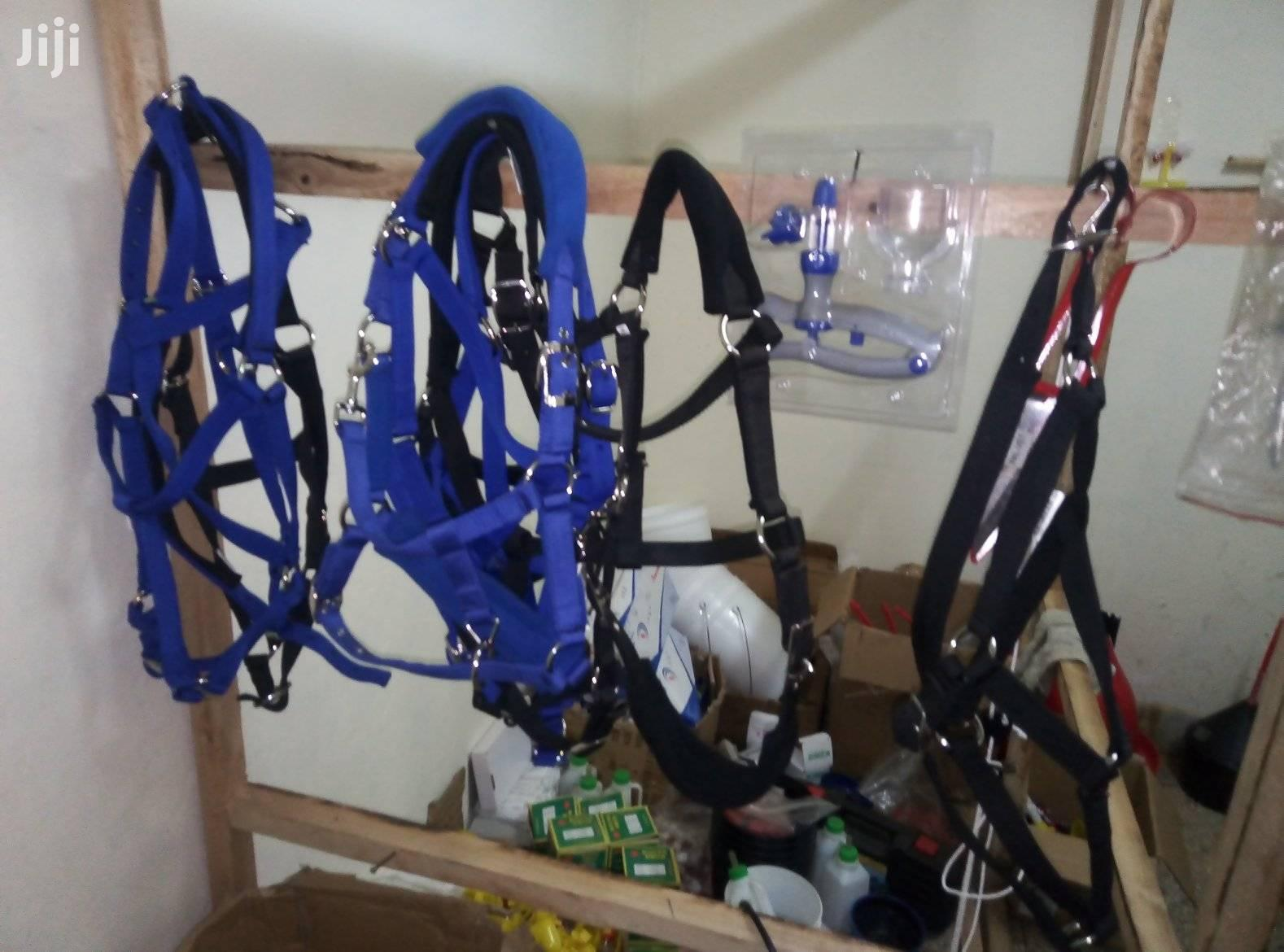 Cow Halters For Sale