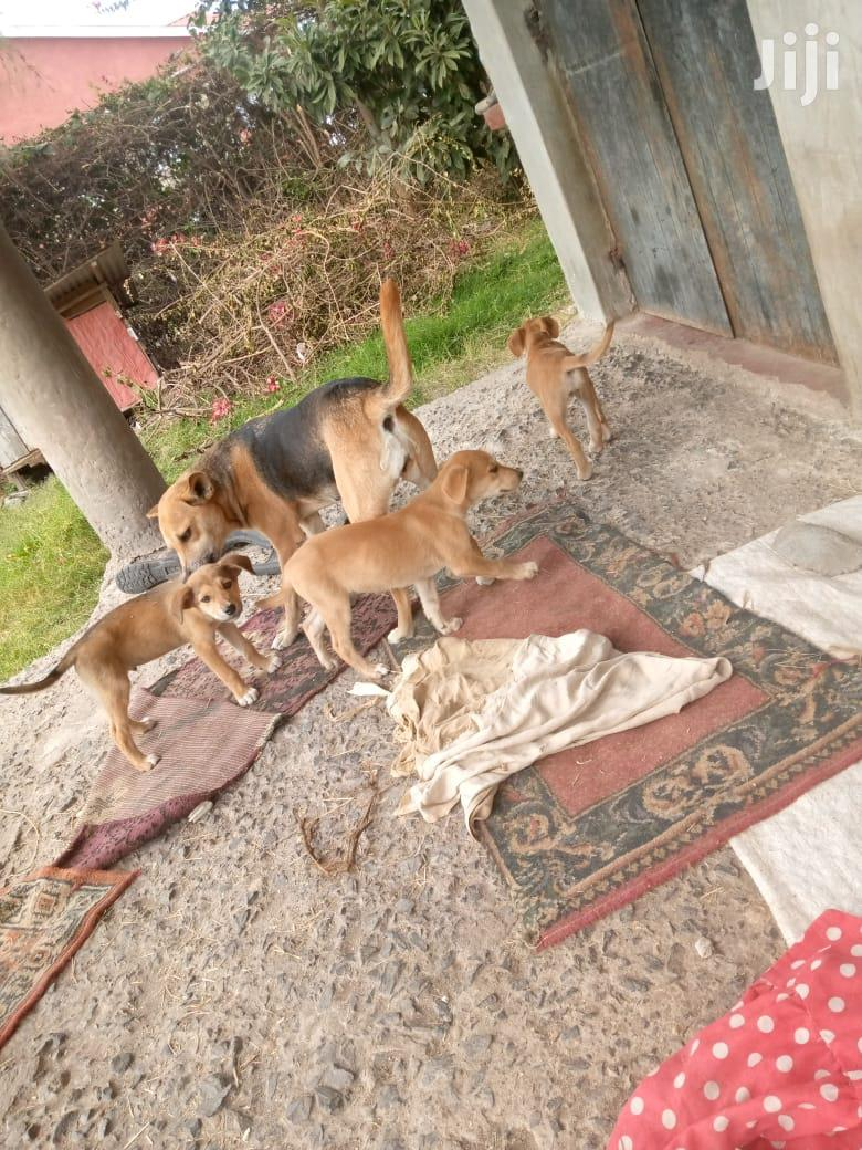 Archive: Baby Female Mixed Breed German Shepherd