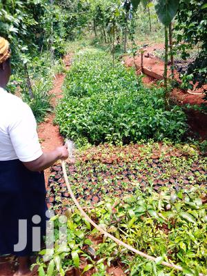 Passion Fruits Seedlings | Feeds, Supplements & Seeds for sale in Kiambu, Thika