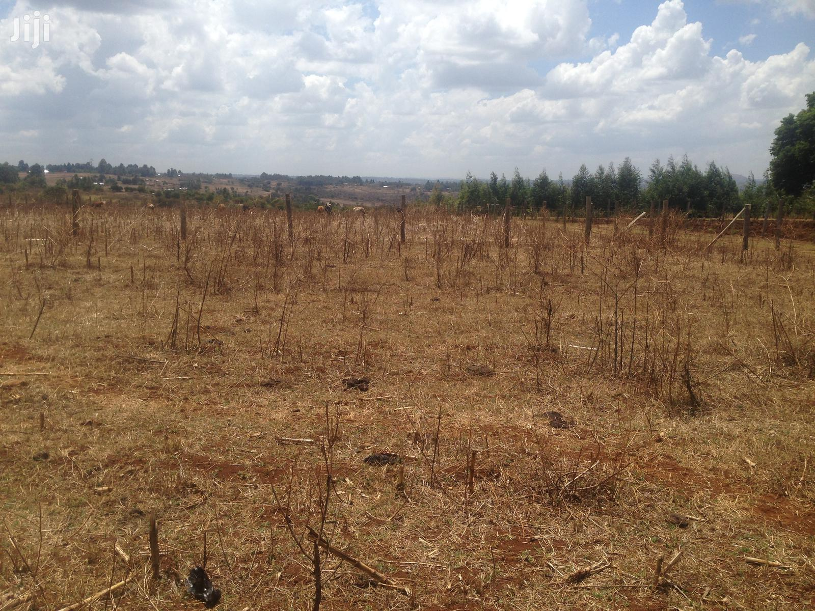 Archive: KIMALEL ESTATE Is a Gated Community Set Up Bordering Upper Elgon View