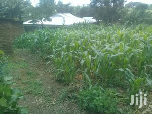 3/4 an Acr Butieli   Land & Plots For Sale for sale in Bungoma, Marakaru/Tuuti