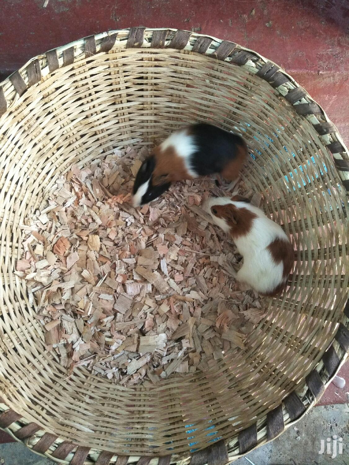 Cute Piggies And Hamsters | Other Animals for sale in Nairobi Central, Nairobi, Kenya